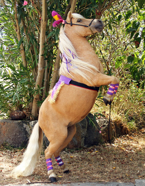 Circus Pony Party
