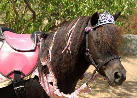 Pony Party Pony - Nikki